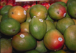 The Mango Festival
