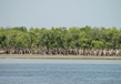 Sundarbans National Park 4