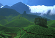 Western Ghats 4