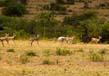 Wildlife 3