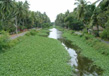Kerala- Gods Own Country 3