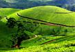Three Weeks In Kerala 1