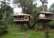 Tree houses in kerala 2
