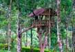Tree houses in kerala 5