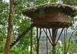 Tree houses in kerala 6