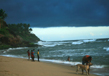Kerala- Gods Own Country 1