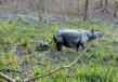 Manas Wildlife Sanctuary 3