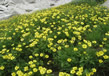 Nanda Devi And Valley Of Flowers National Parks 5