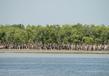 Sundarbans National Park 4