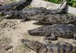 Sundarbans National Park 6